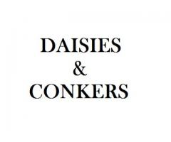 Daisies and Conkers